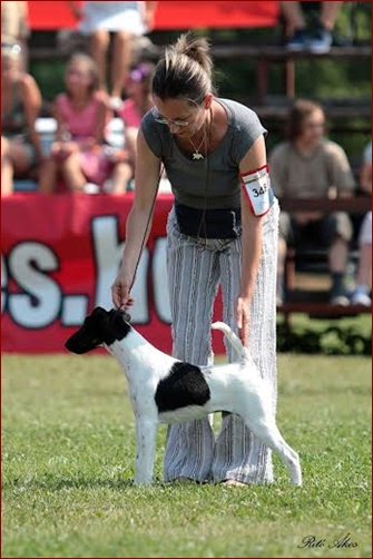 The European Foxterrier Winner Show 2015