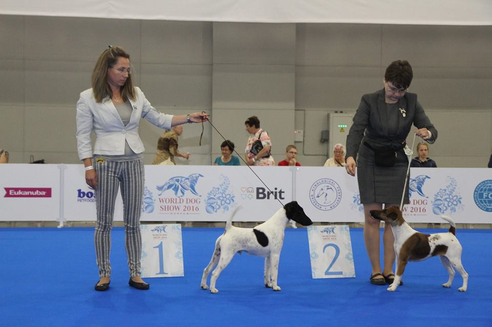 WORLD DOG Show in Moscow