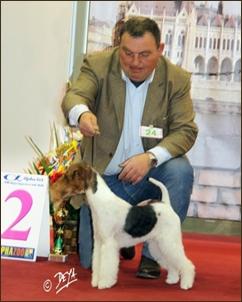 WORLD DOG SHOW 2012