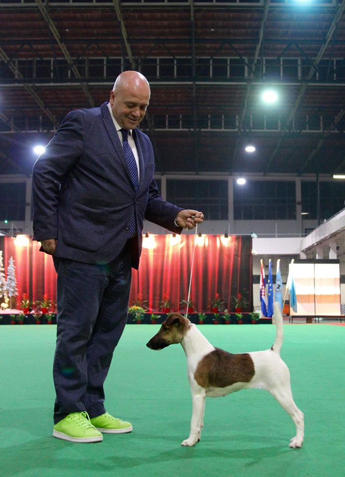 Best of Breed and Club Winner for Mary